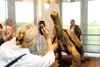 Galapagos_Conservatory_Lonesome_George_Preview-012
